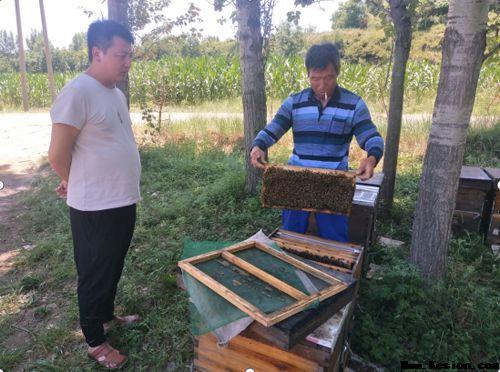 把养蜂当事业 待群众如亲人